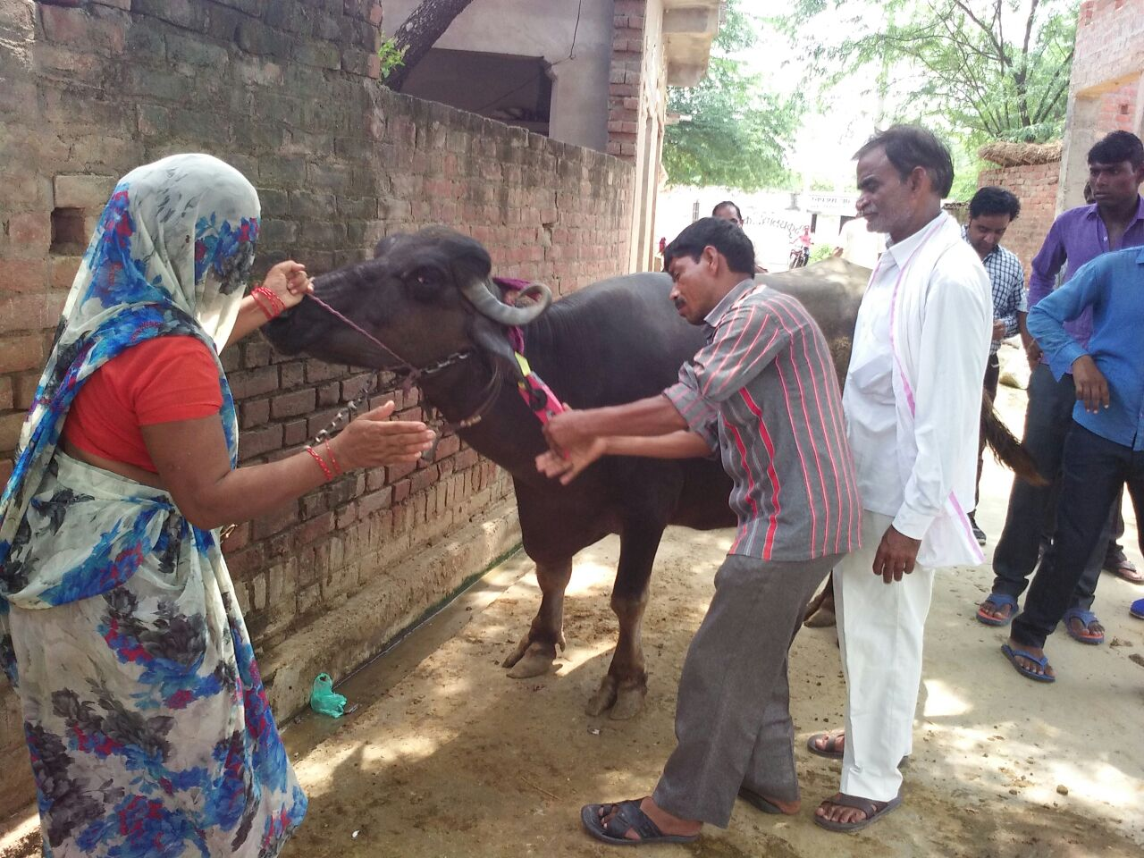 cattle Health camp