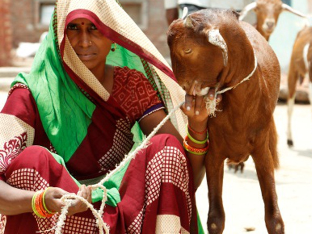Small efforts for big changes… Goatery SHG for Women Empowerment